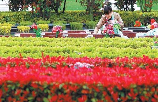 上海墓地葬式改革