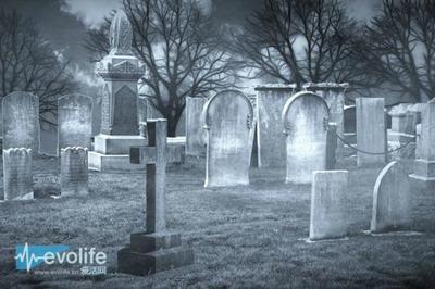 沙福克郡墓地